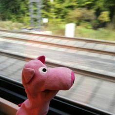 #piggy in #train