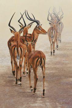 Guy Combes original artworks for sale. Wildlife Paintings, Wildlife Art, Animal Paintings, Texture Painting On Canvas, Animal Graphic, Deer Art, Africa Art, Cute Animal Drawings, African Animals
