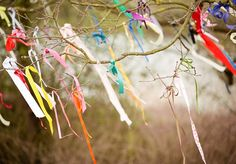 Colourful wedding ribbon tied to a tree