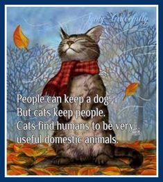 Cat Memes Of The Day Pics Ep Animalmemes Catmemes Memes ; katzen meme des tages bilder ep tier meme katzen meme meme Cat Memes Of The Day Pics Ep Animalmemes Catmemes Memes ; I Love Cats, Crazy Cats, Cool Cats, Weird Cats, Funny Cats, Funny Animals, Cute Animals, Pretty Cats, Beautiful Cats