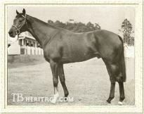 Hawaii Record28: 21-2-3 EarningsUS$371,292 Major wins East Rand Juvenile Stakes (1966) African Breeders' Plate (1966) Chairman's Handicap (1967) South African Guineas (1967) Royal Reserve Guineas (1967) Derby Trial Stakes (1967) Clairwood Winter Handicap (1967) Clairwood Anniversary Plate (1967) Cape Mellow-Good Guineas (1967) Transvaal Spring Champion Stakes (1968) United Nations Handicap (1969) Man o' War Stakes (1969) Bernard Baruch Handicap (1969) Stars and Stripes Handicap (1969)