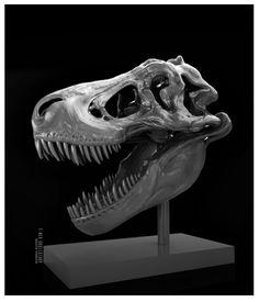 ArtStation - ReX skull study, Maarten Verhoeven
