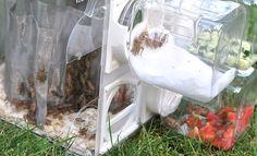 Countertop Cricket-Reactor -- Raise your own crickets at home
