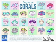 """37 Likes, 2 Comments - The Bearded fish guys (@dutchbeardedfishguys) on Instagram: """"I just #love this #poster i think every reefer needs one! #polyplab #reef #coraltank #coralbooster"""""""