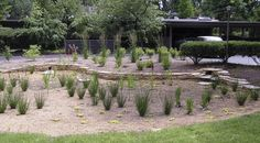 LN Landscape: Streams of Life | Have you ever thought about planting a rain garden?