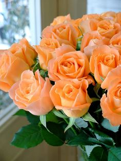Bouquet Of Orange Roses Beautiful Rose Flowers, My Flower, Beautiful Flowers, Beautiful Beautiful, Orange Rosen, Orange Flowers, Exotic Flowers, Red Roses, Flower Arrangements