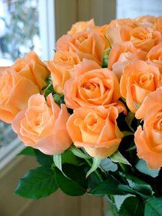 orange roses...