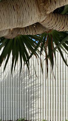 Landscaping design with best landscaper recommendations tristanpeirce Landscape Architecture Pool and Garden Design Perth Western Australia Perth Western Australia, Landscape Architecture Design, Landscaping Design, Garden Design, Plant Leaves, Plants, Landscape Architecture, Landscape Designs, Plant