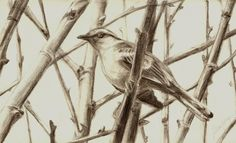 #draw # desenho #drawing #grafite #sketch #sketchbook #bird #pássaro