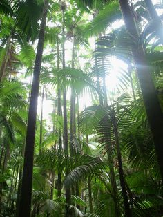 Rainforest Shadows, Hilo,  Big Island, Hawaii
