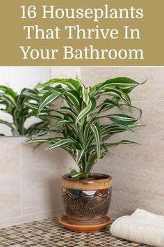 Best Indoor Plants, Indoor Garden, Garden Plants, Outdoor Gardens, Flowering House Plants, Indoor Greenhouse, Inside Plants, Cool Plants, Cheap Plants