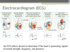Cardiac Cycle, Ekg Interpretation, Tricuspid Valve, Heart Murmur, Heart Valves, Biology Teacher, Heart Muscle, Medical Examination, Lab Tech