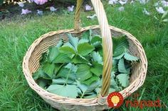 Psoriasis Free - Benefits of strawberry leaves. - Professors Predicted I Would Die With Psoriasis. But Contrarily to their Prediction, I Cured Psoriasis Easily, Permanently & In Just 3 Days.