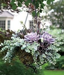 How-to:  Succulents in a Hanging Basket Hanging Flower Baskets, Hanging Succulents, Growing Succulents, Hanging Plants, Cacti And Succulents, Potted Plants, Planting Flowers, Garden Plants, Winter Hanging Baskets