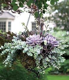 succulent hanging basket