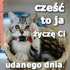 Humor, Blog, Cats, Animals, Gatos, Animais, Cheer, Animales, Animaux