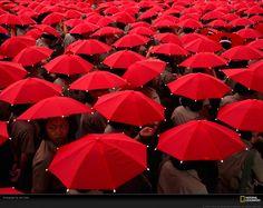 Paraguas rojos