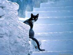wallpaper, fond ecran, image grece chat