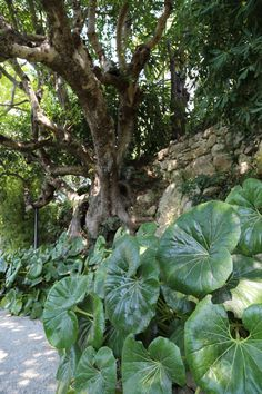 Villa Ephrussi de Rothschild, garden, seaside villa and garden, Cote d'Azur, France, 2015, Agata Byrne garden travels
