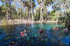 Mataranka Hot Springs in the Northern Territory of Australia Perth, Brisbane, Melbourne, Travel Around The World, Around The Worlds, Roadtrip Australia, Places To Travel, Places To Visit, Australian Holidays
