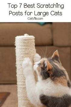 Looking for the best scratching posts for large cats? Check out our top 7 picks, along with what features we look for in one! Tall Cat Scratching Post, Fancy Cats, Brown Carpet, Cat Scratcher, Warm Grey, Cat Tree, Kitty, Pets, Brown Rug