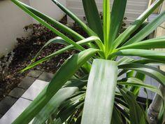 7 Sachen Sonntag: Yuccaplame Celery, Vegetables, Blog, Sunday, Vegetable Recipes, Blogging, Veggies