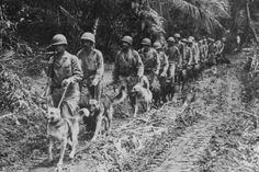 Marine Raiders and their 'Devil Dogs' walk along a jungle trail. (Photo: U.S. War Dogs Association)