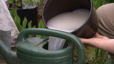 Gießkanne mit einer Mischung aus Hefe, Wasser und Zucker als biologischer Beschleuniger für den Kompost   Bildrechte: MITTELDEUTSCHER RUNDFUNK