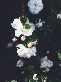 bloom and blossom My Flower, Beautiful Flowers, White Flowers, Pretty Pictures, Planting Flowers, Bloom, Painting, Wallpapers, Gardenias