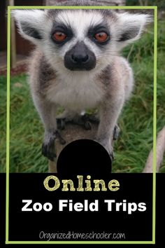 A virtual zoo field trip is a great alternative for the real thing especially during Distance Learning. See your favorite animals every day from the comfort of your own home. Go on online zoo field trips as often as you want . for free! Home Activities, Toddler Activities, Educational Activities, Learning Activities, Home Learning, Kids Learning, Teaching Kids, Le Zoo, Virtual Field Trips