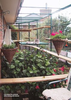 Cat enclosure for the cats!