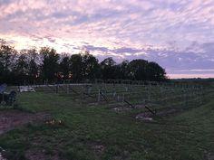 Vineyard, Celestial, Sunset, Outdoor, Outdoors, Vine Yard, Vineyard Vines, Sunsets, Outdoor Games