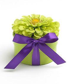 Look at this #zulilyfind! Green Zinnia Seed Gift Box #zulilyfinds