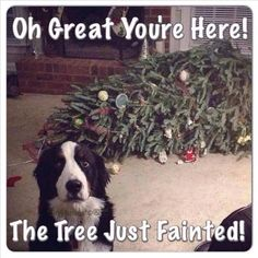 Christmas Funny Pictures - Dog needs help with the swooning Christmas tree...