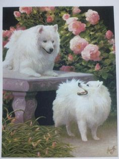<3 American Eskimo <3 They look like they are wearing bloomers all the time!