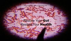 The human gut contains 10 times more bacteria cells than all the human cells in the entire body. We are more bacteria than we are human! The digestive tract houses the bulk of the immune system, at least 3/4 of it, with over 500 known diverse bacteria species. Our gut is home to approximately 100,000,000,000,000 (100 …