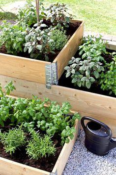 Veg Garden, Vegetable Garden Design, Garden Pots, Outdoor Plants, Outdoor Gardens, Market Garden, Plantar, Back Gardens, Growing Plants