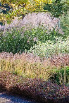 Trawy ozdobne w ogrodzie – artystyczne ujęcie - Architektura, wnętrza, technologia, design - HomeSquare