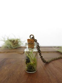 You are my World, Tiny Live Terrarium Necklace by FaerieNest