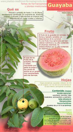 Propiedades y usos medicinales de la guayaba