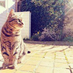 Pet care tutorials: pettut.com