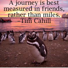 """""""A journey is best measured in friends, rather than miles."""" - Tim Cahill"""
