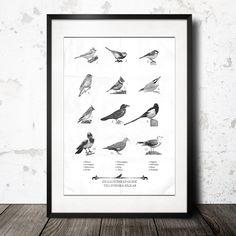 Guide to swedish birds är en illustration av populära och välkända fåglar som kan ses i den svenska naturen.