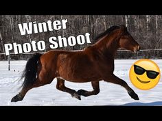 Awesome Winter Photo Shooting! - Canadian Horse