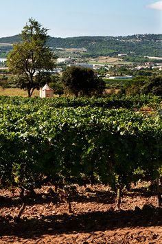 Visita al Celller Mas Gil, Ruta del vi per CalongeEls proposem una visita en exclusiva en aquest prestigiós celler, gaudint d'un capvespre passejant entre les vinyes i descobrint els sabors i aromes de les diferents varietats de raïm. Una experiència única que ens permetrà aprendre de la mà dels propis viticultors i enòlegs tots els processos que intervenen des de la vinya fins a l'ampolla. Descobrir com el vi va evolucionant d'una etapa a un altre i es fa més complexa. La visita inclou un…