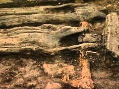 Time Team Special 25 (2005) - Life on the Edge 1000BC (Washingborough, Lincolnshire)