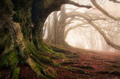 You and me... strong as the roots of an old tree