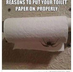 I am always going to be checking for spiders in my toilet paper now!