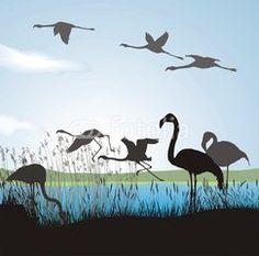 Flamingo on river