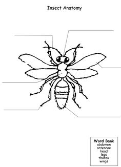 Insect Body worksheet | 3rd Grade Science Unit: Insects (Spring ...